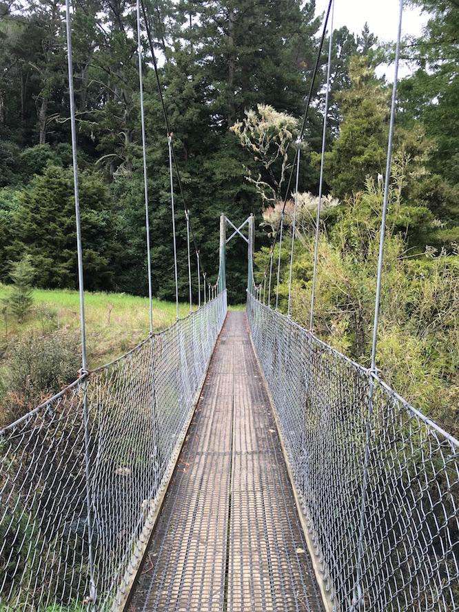 NZ Whangarei Nature walk 2