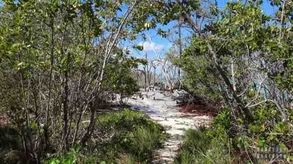 Droga do dzikiej plaży na Cayo Jutias, Kuba