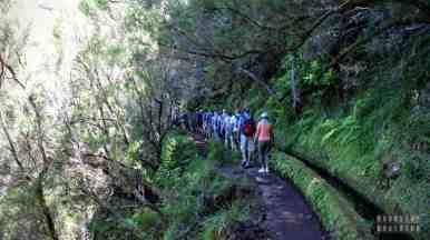 Kolejki na lewadach - Madera