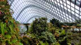 Treetop Walk w Cloud Forest, Gardens by the Bay - Singapur
