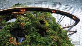 Cloud Walk w Cloud Forest, Gardens by the Bay - Singapur