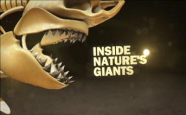 Inside Nature's Giants