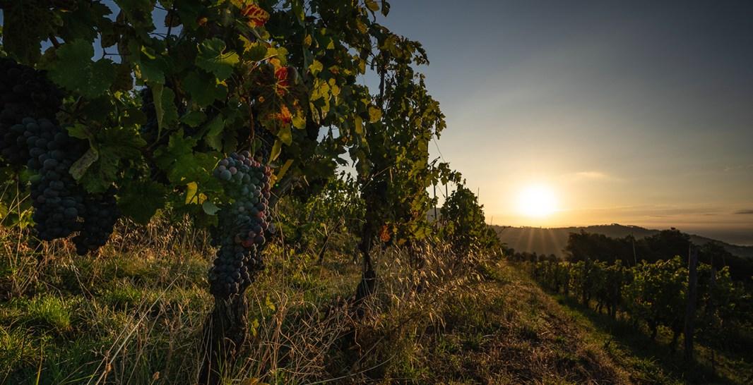 tramonto sulle vigne di Segale