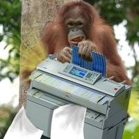 An ape from the alphabet list in a tree with a copier. Typically weird image using the alphabet list.