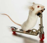 mouse on a scooter