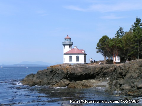 Whale Watching Adventure Friday Harbor Cruise