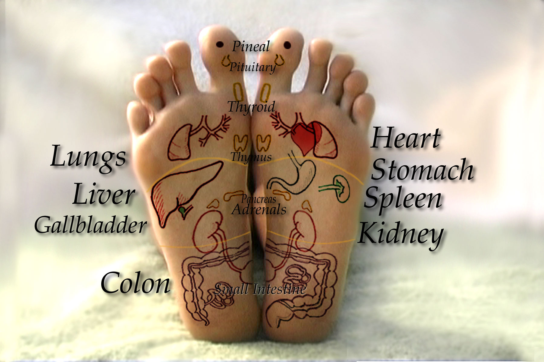 Reflexology for the feet and hands dvd video  Real Bodywork