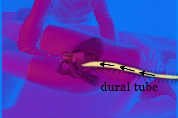 Cranial Sacral Therapy DVD video  Real Bodywork