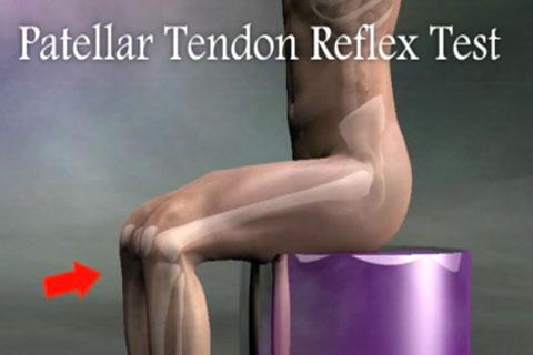 Spine 2 tests  Real Bodywork