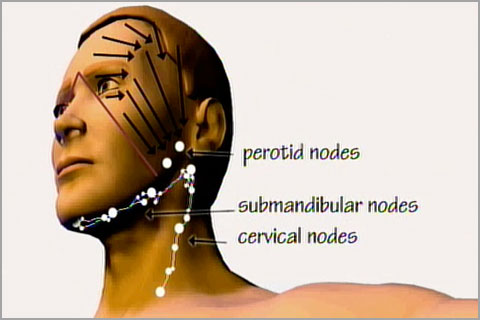 Lesson 2 Lymph nodes and drainage patterns  Real Bodywork