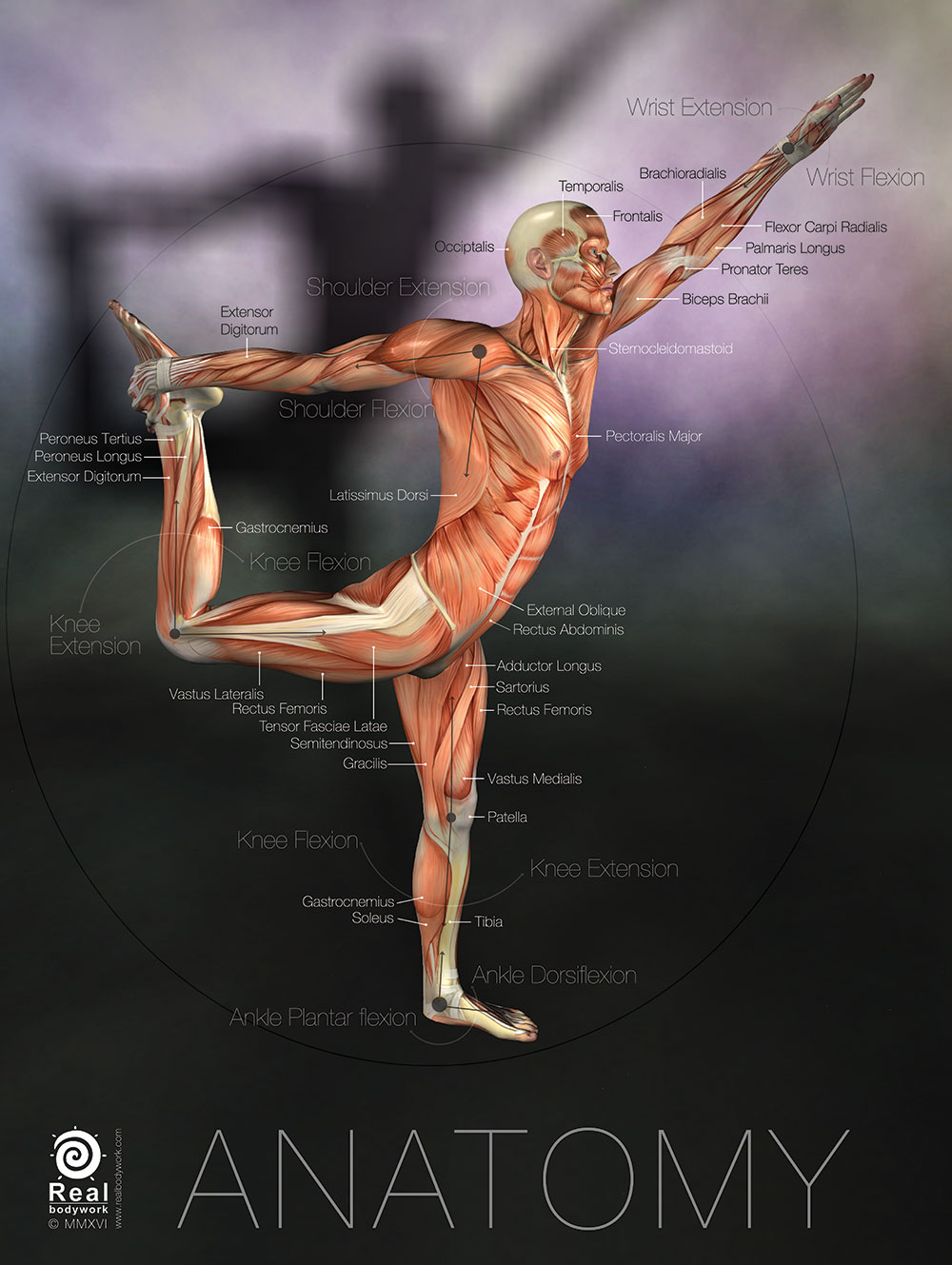 Lord of the Dance Anatomy Poster  Real Bodywork