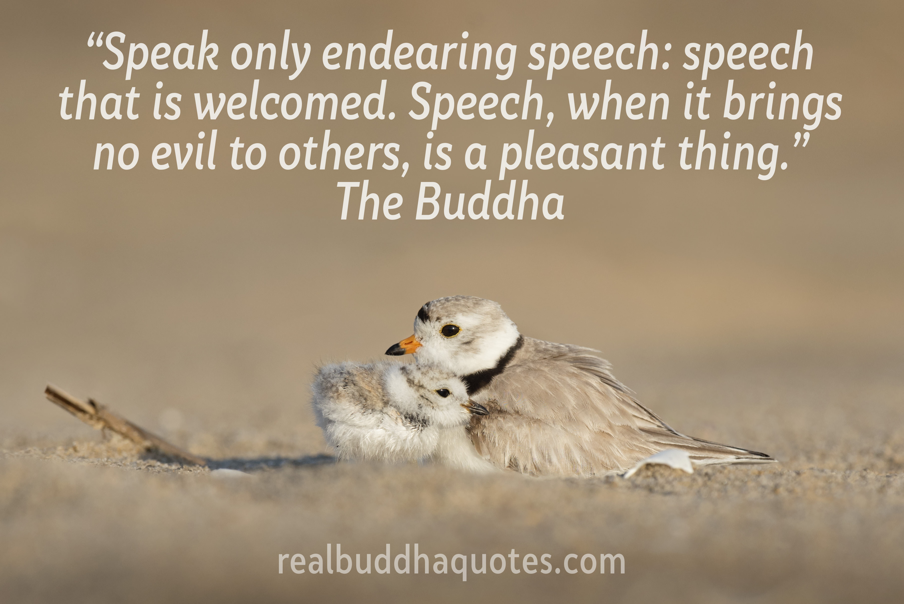 Real Buddha Quotes Animal And Compassion Quotes Buddha Picture
