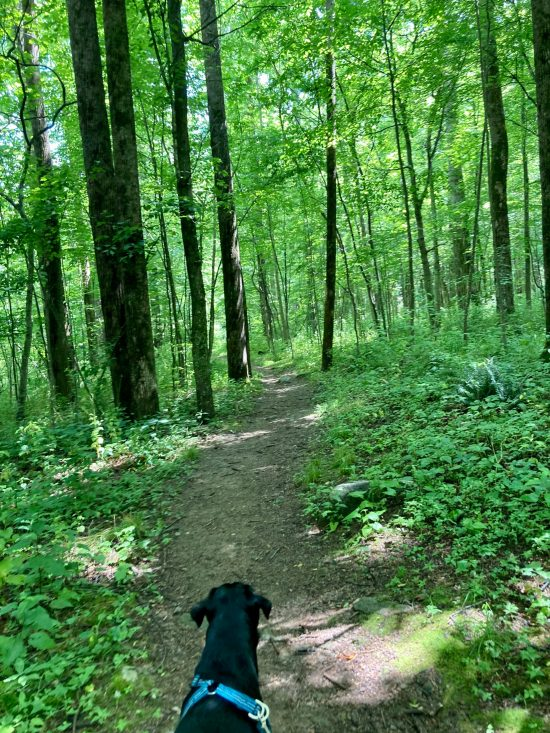 Dog and a trail