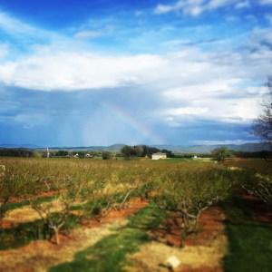 Chiles Rainbow