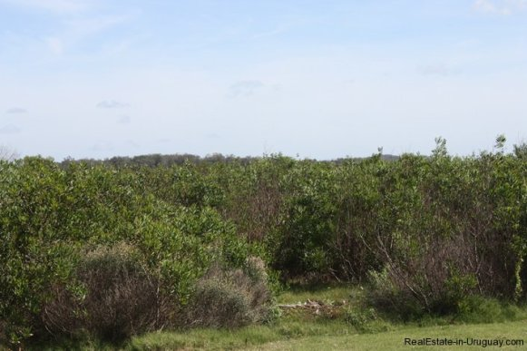 4514-Plot-of-Land-in-Santa-Monica-just-minutes-before-Jose-Ignacio-2137