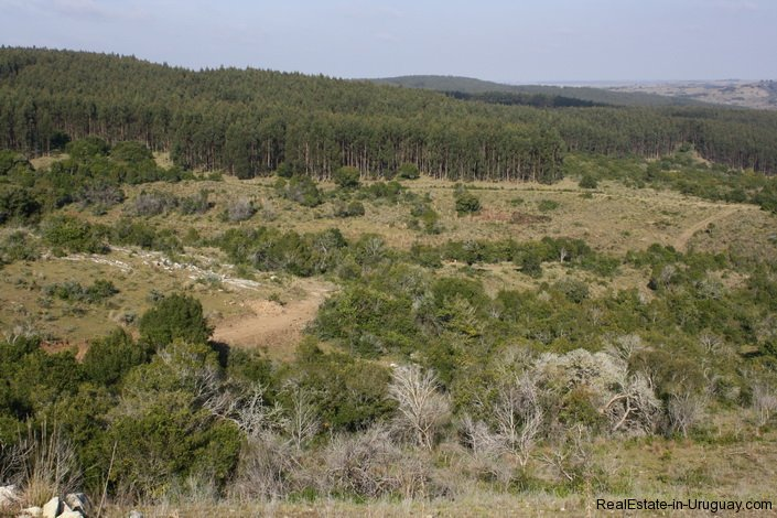 4590-50-Hectare-Field-in-the-Sierra-Hills-by-Garzon-1879