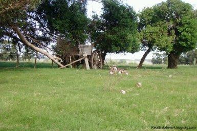4795-Incredible-Campo-Land-in-Elevated-Area-in-Rinco-del-Anastasio-near-Jose-Ignacio-1832