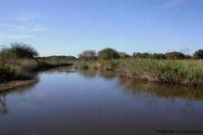 4795-Incredible-Campo-Land-in-Elevated-Area-in-Rinco-del-Anastasio-near-Jose-Ignacio-1835