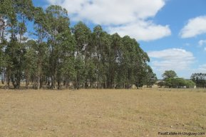 4797-Attractive-Ranch-Land-with-small-School-close-to-Jose-Ignacio-1749