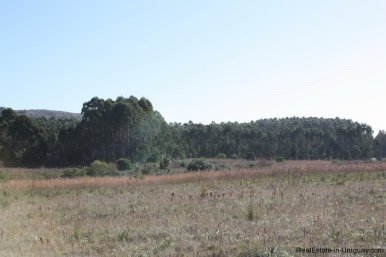4113-Land-offering-many-Development-Possibilities-and-Mountain-Views-in-Las-Vertientes-2166
