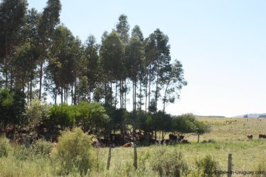 5118-Field-with-great-Potential-to-Build-andor-use-as-Farmland-2596