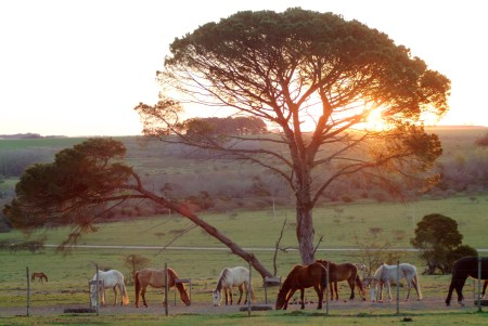 San Pedro Estancia in Uruguay