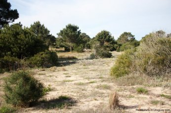 5330-Beach-Front-Apartment-in-Playa-Brava-4319