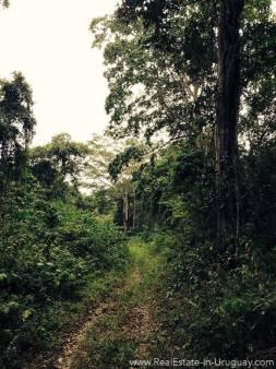 Jungle Manabi Coast, Ecuador 2
