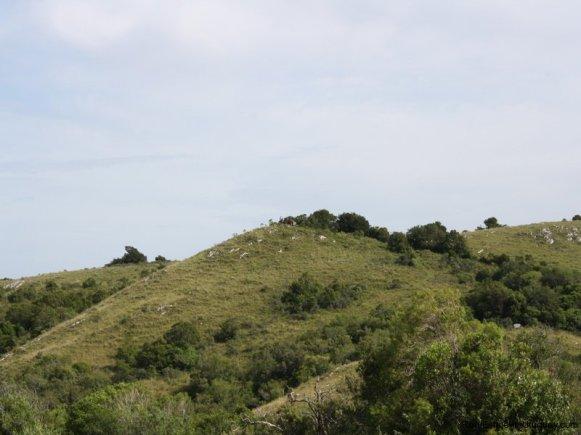 5538-Little-Posada-on-100-Hectare-Land-in-Minas-4402
