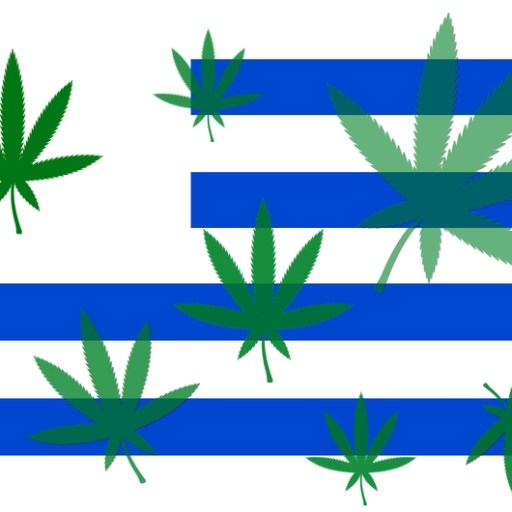 Marijuana in Uruguay
