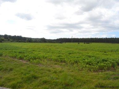 Fields-of-Farm-House-San-Luis-Montevideo