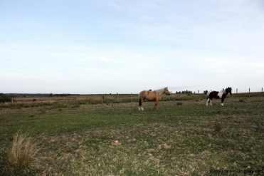 5603-Horses-on-Agro-Field-San-Jacinto-near-Montevideo