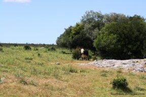 5089-Rocks-of-Chacra-Jose-Ignacio-Area
