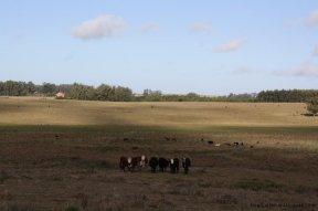 5650-Land-Garzon-Area6