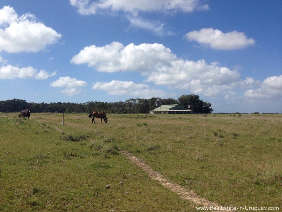 1000 Ha Chacra near Cabo Polonia - Land with Horse