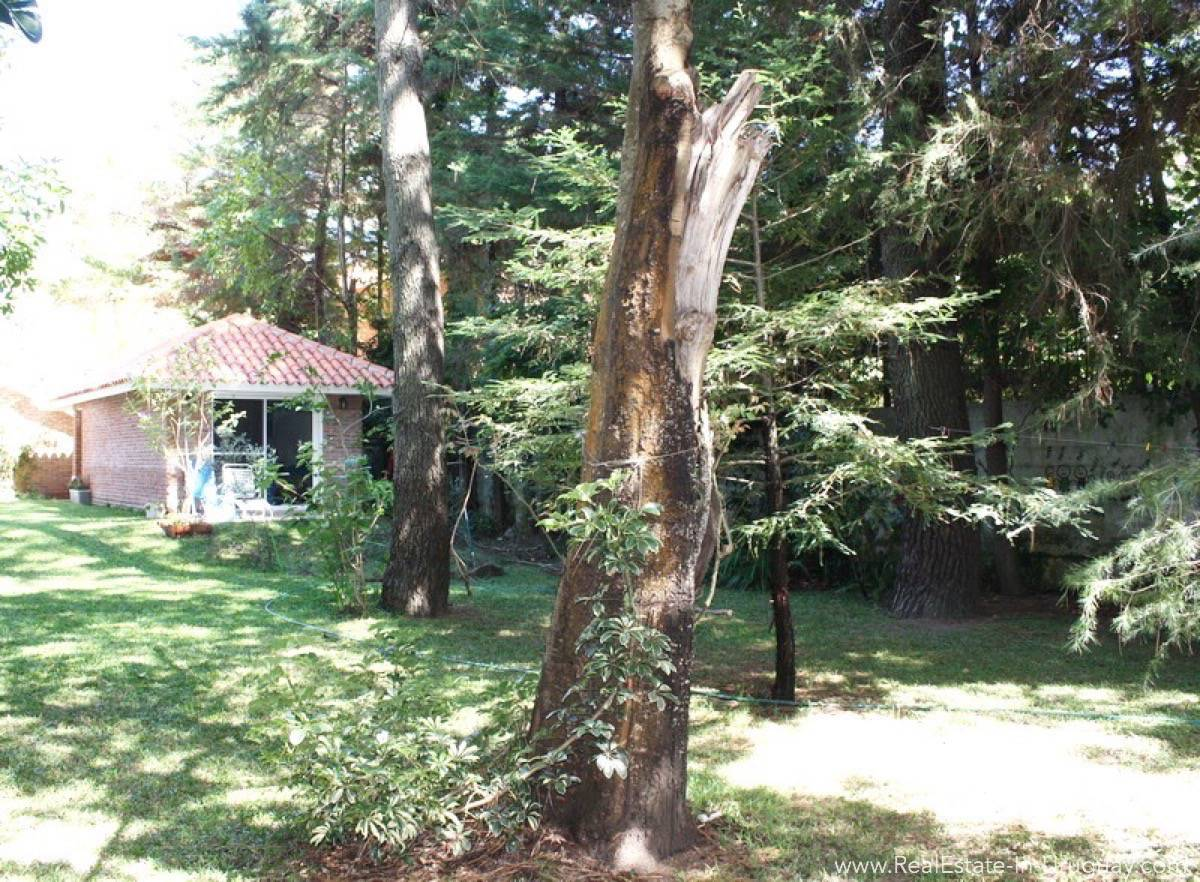 Bungalow on Mansa - Trees