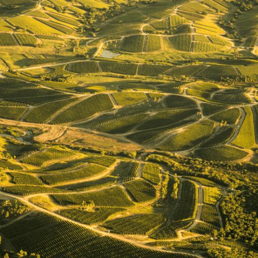 Garzon winery in Uruguay
