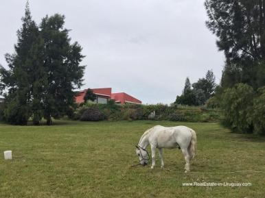 6032 3 Modern Sustainable Bio Chacra in Pueblo Eden - Horse