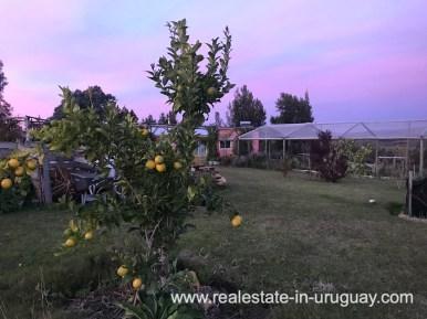 Fruit trees of Modern Sustainable Bio Chacra in Pueblo Eden New Built
