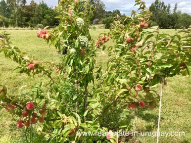 Flowers of Modern Sustainable Bio Chacra in Pueblo Eden New Built
