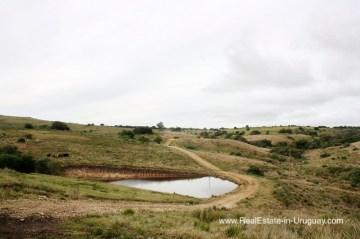 Vineyard on 40 Hectares in Pueblo Eden