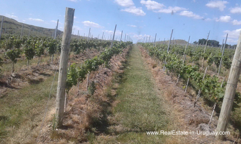 Vineyard on 40 Hectares in Pueblo Eden