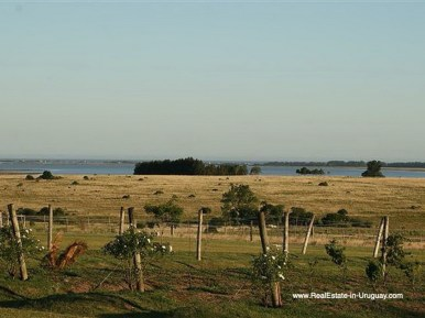 Large Estate near Jose Ignacio with 70 Hectares Land