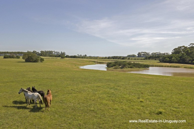 Horses of Spectacular Beachfront Property near Jose Ignacio