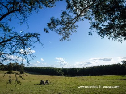 Land of Large Touristic Ranch in the Countryside of Uruguay