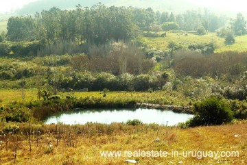 Pond of 10 Hectare Vineyard not far from Punta del Este