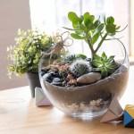 How To Make A Self Sustaining Terrarium