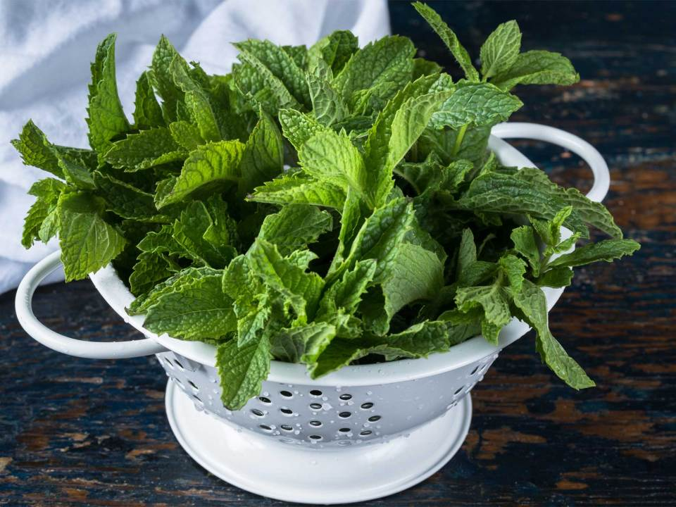 Temperature of How to Care for Indoor Mint Plant