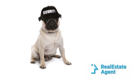 "a pug acts as a guard dog wearing a black hat with ""security"" written in"