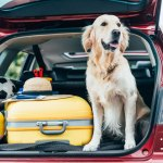 how to rehome a pet successfully